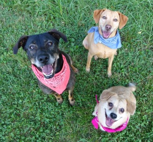 Daisy, Yippee and Emma are no fools -- they know who has the real treats!