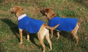 All grown up -- in the light weather coats I made for them last Fall.