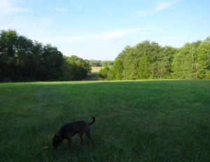 THE FIELD ... once home to 2 horses, is now doggy paradise!