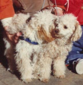 Alexandria, on right, was my first rescue. Here she is with her son, Tigger. 1981