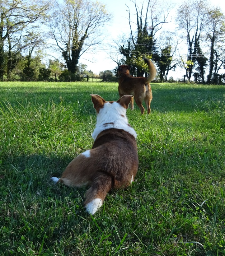 Two of my bestie beasties guarding me in the field ...