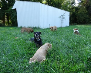 The Gang settled down pretty quickly to join me ... at least those not surveying for deer poop.