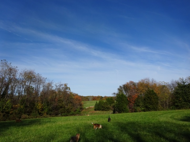 The dogs and I spent a lot of time outside, just soaking in the last of the Fall.